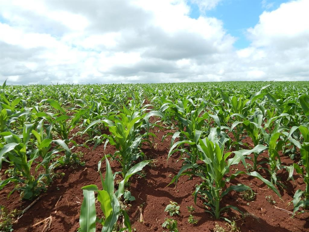 African agri-tech