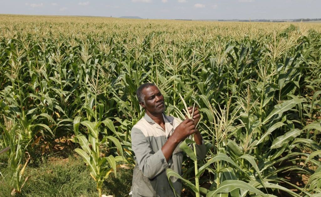 Five African AgriTech ventures driving growth