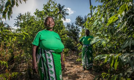 Komaza raises $28M Series B for tech-enabled sustainable forestry